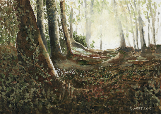 Woods at Abinger Common, Surrey - Art Prints For Sale
